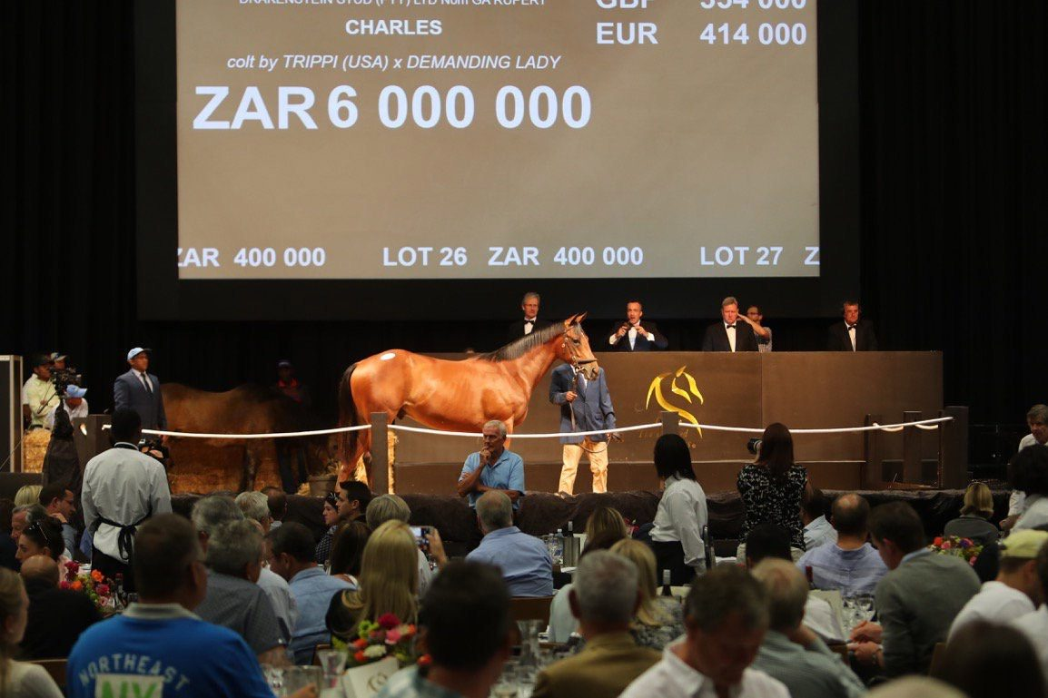yearling sale south africa