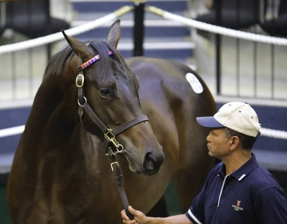 Malmoos in the 2019 National Yearling Sales ring. Image: Candiese Lenferna