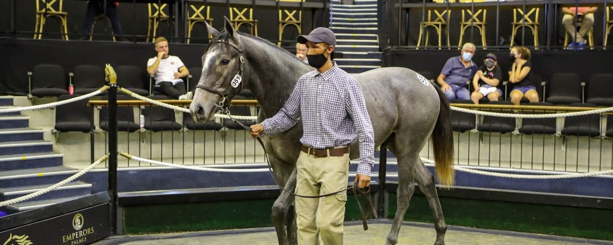 The grey Gimmethegreenlight colt out of All Is Secret. Image: Candiese Lenferna